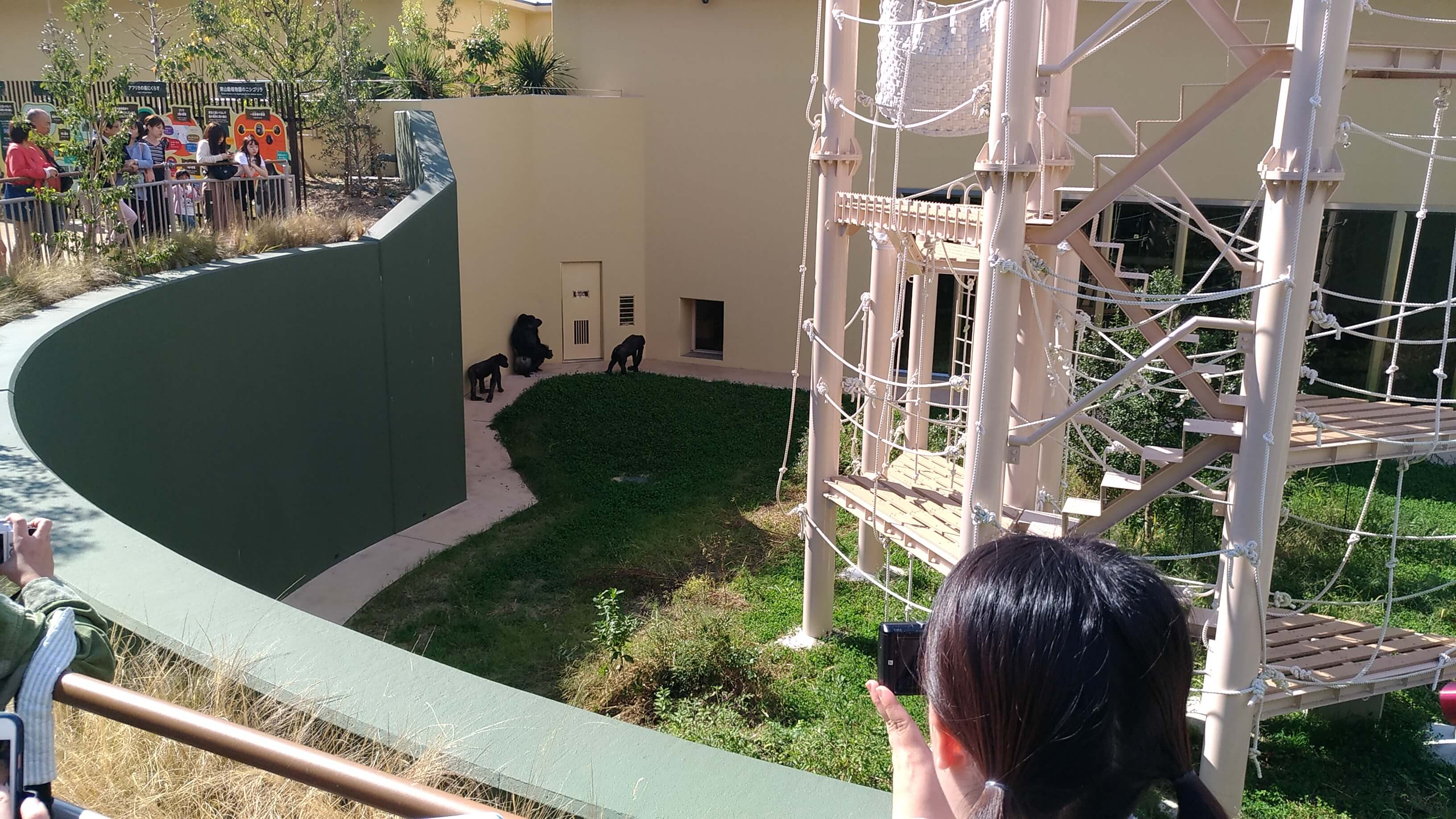 東山動植物園の新ゴリラ・チンパンジー舎