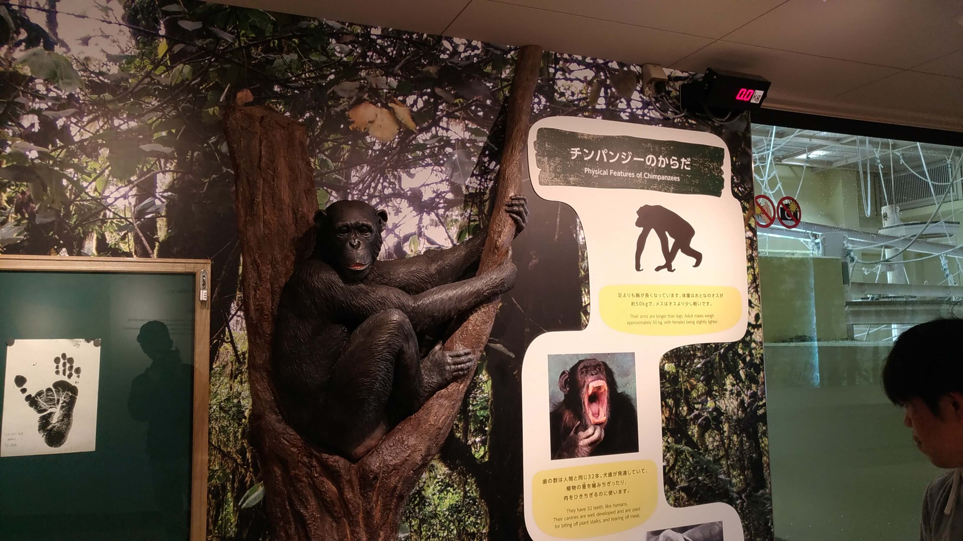 東山動植物園のチンパンジー舎